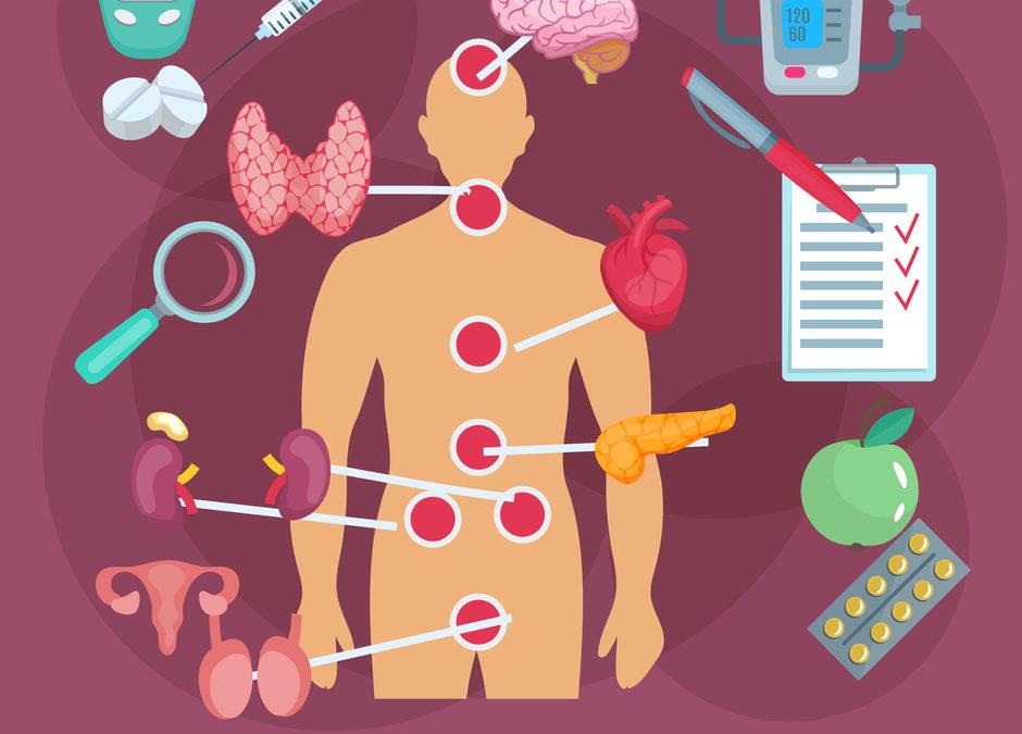 Qué son las Glándulas Endocrinas y cuales son controladas por la hipófisis